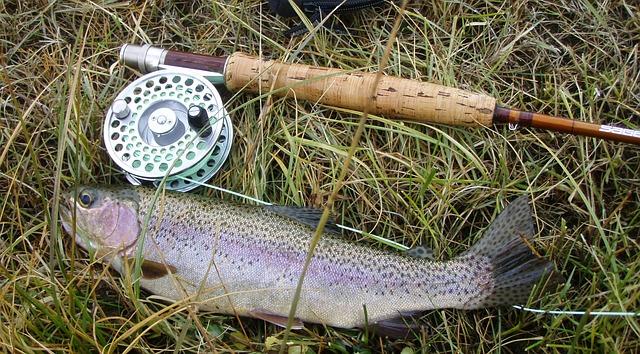 rainbow trout 609551 640 Journée de la pêche